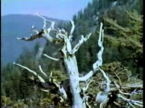 Visions of the Wild (1986) - Full Length documentary on Wilderness Conservation