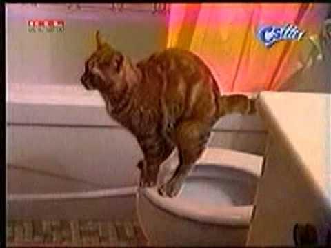 Smart Cat Poops Into Toilet
