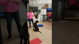 Reactive Dog Class with Chloe