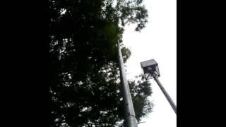 東京都東村山市 防災無線 「やしの実」 17:30(春夏)