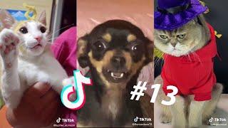 LOS MEJORES TIK TOKS DE GATOS Y PERROS #13  Recopilación de Tik Toks de animales