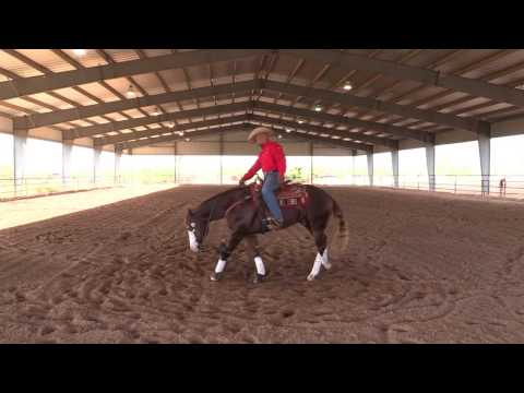 Matt Mills Reining ' How to Teach Your Horse How to Spin Step 1 '