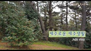 밤드림(bamdream) 브이로그 4 - 제주일상(이마…