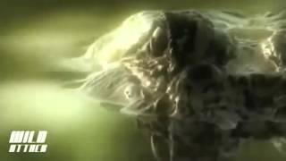 Crocodile vs Anaconda Crocodile Attacks Anaconda   Video Dailymotion
