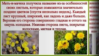 Какие растения весной цвести торопятся 1 класс пнш презентация
