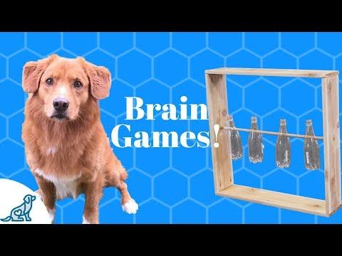 Homemade Brain Games For Dogs