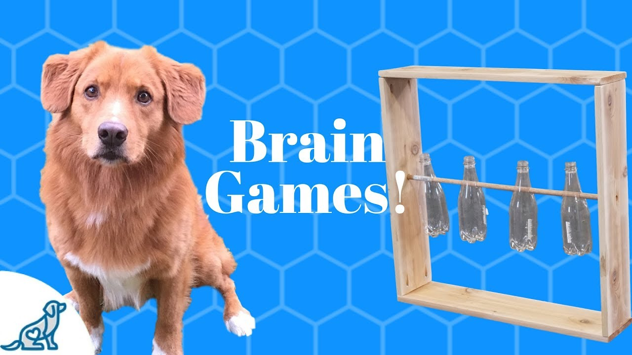 House Dog Games