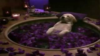Cottonelle Commercial Puppy Gets Pampered