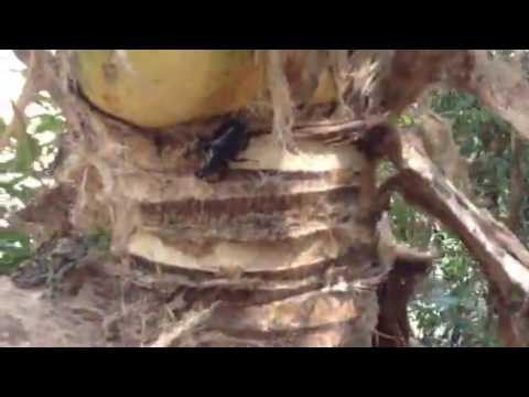 Khoi luan thien di bat bo canh cung