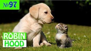ПРИКОЛЫ 2017 с животными. Смешные Коты, Собаки, Попугаи // Funny Dogs Cats Compilation. Май №97