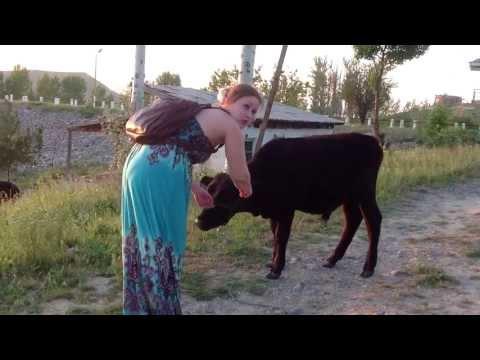 знакомства в таджикистан г худжанд