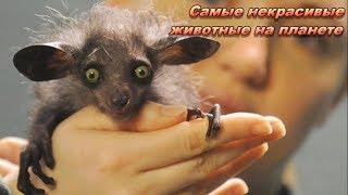 Самые некрасивые животные на планете