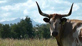 Ranch Bar U : Là où l'histoire de l'élevage du bétail renaît