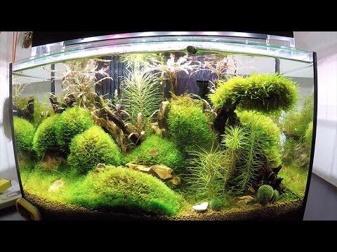 8 acuarios plantados en una sola casa youtube - Peceras para casa ...
