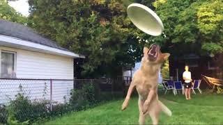 Funny Animals / Śmieszne zwierzęta