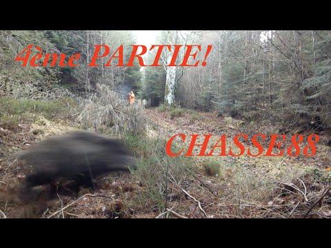 Chasse Au Sanglier En Battue Dans Les Vosges 4 ème Partie Saison 2015/2016 Blaser R8