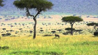 Safari Kichwa Tembo Kenya.mov