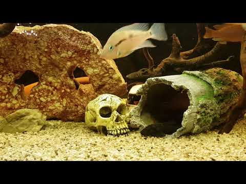Mein Malawi Aquarium 500l