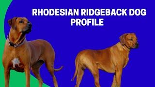 Rhodesian Ridgeback Dog Profile