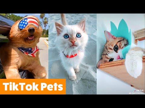 TikTok Pets That Will Make You Smile | Funny Pet Videos