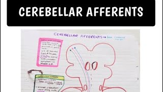 Cerebellar Afferent Pathways (Made EASY!)