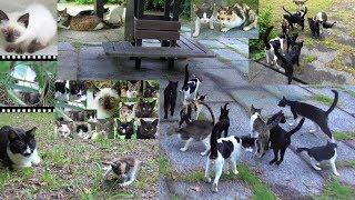 飼い主が見つかり無事保護された野良猫達[シャムエ🐈の誕生地]の全盛期(未公開映像)~現在の様子🐾