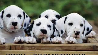 Яка ти порода собаки по гороскопу / ANGELINA ANIME