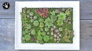 DIY - mit Sukkulenten bepflanzter Bilderrahmen  | Vertikaler Garten | Hängender Garten