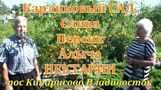 Карликовый сад  Кипарисово . Слива, Персики, Алыча.