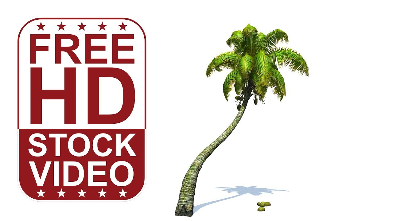 free hd video 3d animated coconut palm tree with wind effect on