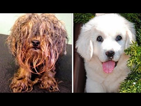15 UNBELIEVABLE dog transformations BEFORE and AFTER rescue