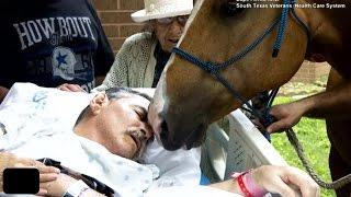 【感動】「おじいさん、今までありがとう」 最期の別れを告げるため、病院へ来た馬に涙腺崩壊。