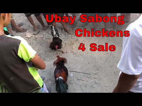 Sabong Chickens Market Day - PRIZE GIVE AWAY! Dog Whisperer In The Philippines - Vlog Philippines