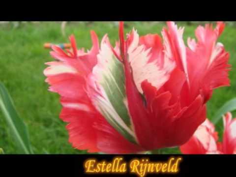 Картинки очень красивые цветы;) (закрой глаза)