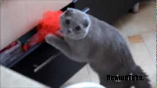 Kot złodziej przyłapany