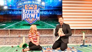Beth Stern's Kitten Bowl