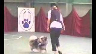 Keeshond Dog Dance