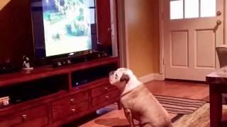 「テレビを見るときは3メートル離れて!」とか叱られるのを、無視し続けていた犬に報いが訪れた