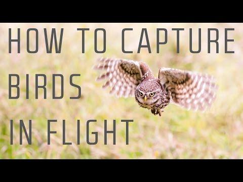 How to capture birds in flight - Wildlife Photography Tutorial
