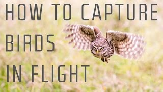 How to capture birds in flight - Wildlife Photography Tutorial