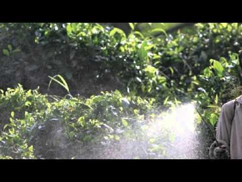 Silent Spring by Rachel Carson, summary video