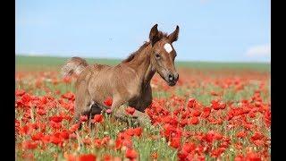 лошади  жеребята дурачатся..смешное видео