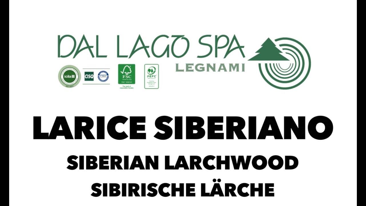 Larice Siberiano Siberian Larchwood Sibirische Lärche