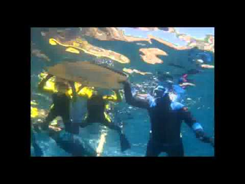 Experiencing Marine Reserves 10th Anniversary Charity Movie