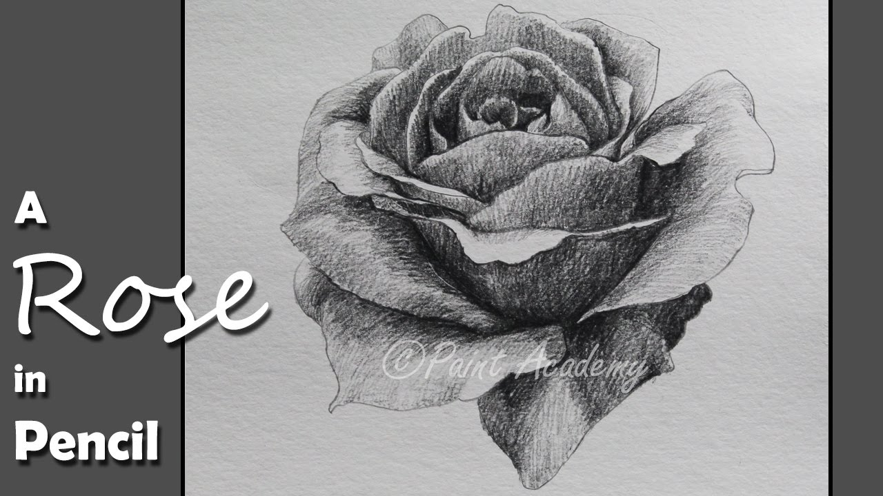 How to Draw & Shade A Rose in Pencil | step by step slow ...