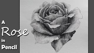 How to Draw & Shade A Rose in Pencil | step by step slow video