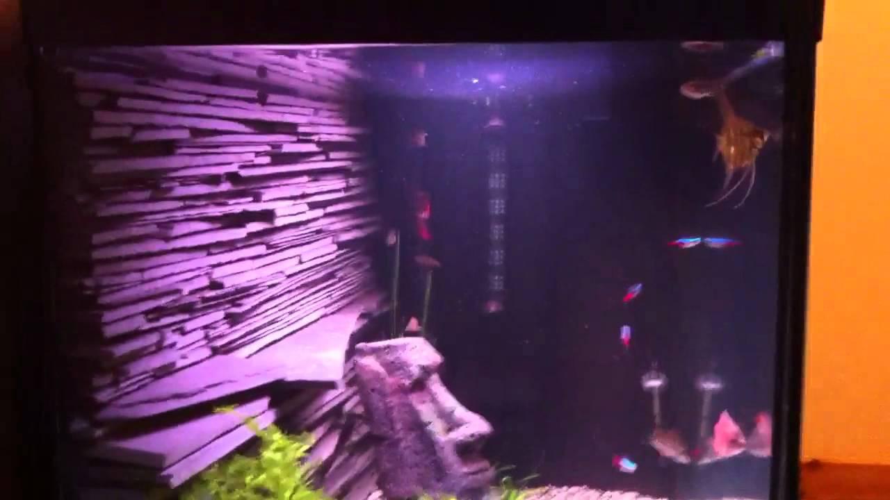 Diy Slate Aquarium Background Youtube