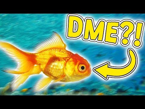 JEG ER EN FISK! - Feed and Grow: Fish