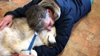 my-husky-didn-t-wanna-be-left-at-the-vets-she-just-wants-to-cuddle