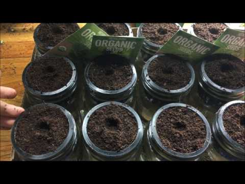 How To Make Cheap Glass Jar Hydroponic Kratky System - Starting Seeds - Complete: Step by Step Guide
